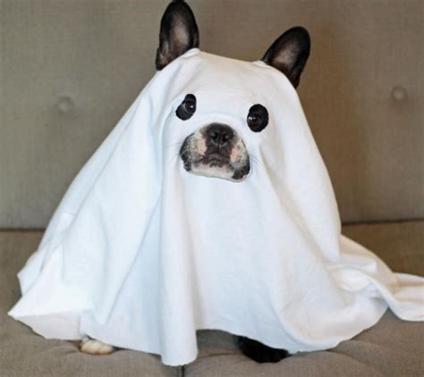 ghost costume for dogs 25 of 2015 s most amazing pet costumes piggie
