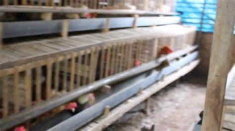 Telur Pet Satuan Harga 20rb ayam kung petelur aura farm bulukumba
