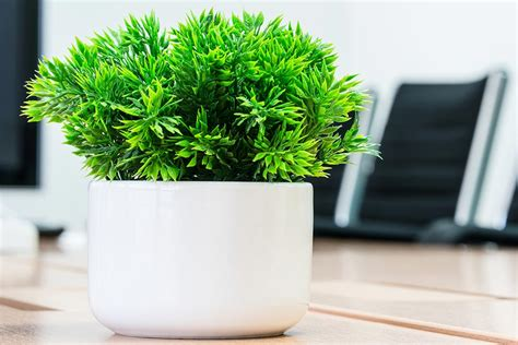plant on desk did an overgrown plant pot on a desk lead to workplace