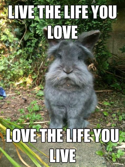 Angry Bunny Meme - angry bunny rabbit memes