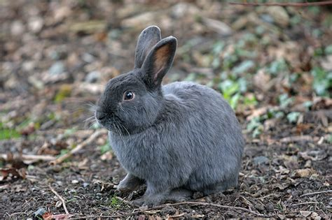 Grey Rabbits otoreview my quot otomobil quot review happy new year of