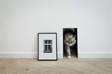 interior cat door cat door interior design ideas