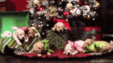 animal christmas animated gif