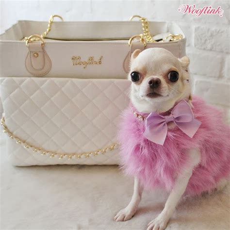 chihuahua puppy clothes best 25 chihuahua clothes ideas on yorkie clothes clothes and easy