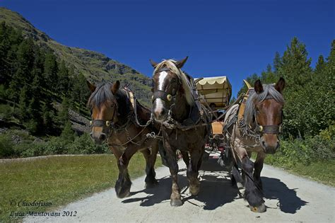 val roseg carrozze cavalli e carrozze in val roseg juzaphoto