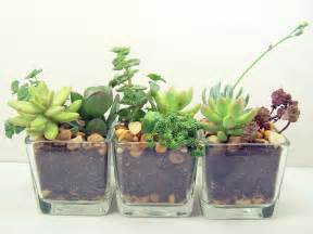 Small Plants For The Desk Terrarium Succulent Glass Planters Kit Cute Office Desk