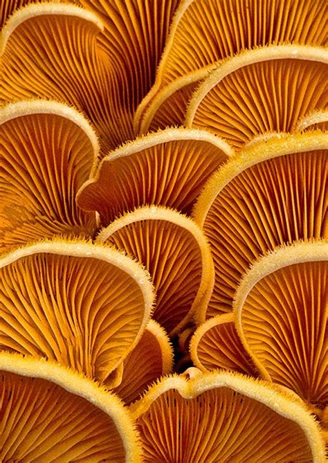 an observed pattern in nature without attempting to explain it i love fungus this one reminds me of fish scales a