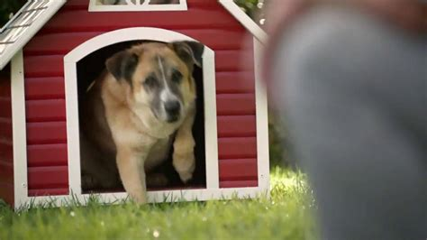 dog house commercial lowe s tv commercial for dog house ispot tv