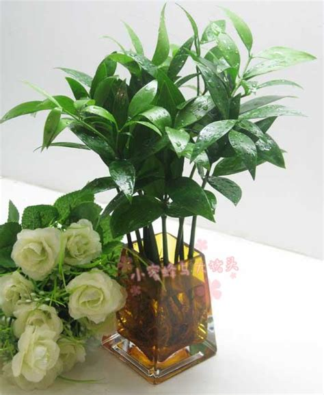 indoor water plant promotion online shopping for