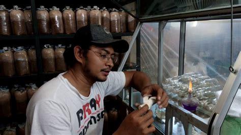 Bibit Jamur Tiram F0 cara membuat bibit f0 jamur tiram part 1