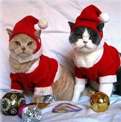 imagenes de feliz navidad con gatitos fotos de gatos vestidos de navidad im 225 genes de navidad