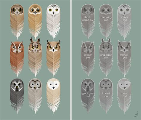 printable owl bookmarks birds of a feather by sash kash on deviantart