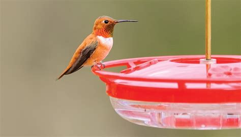 nectar feeders wild birds unlimited wild birds unlimited
