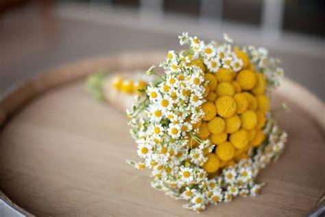 fiori a palla giardinaggio la rivista e il portale giardinaggio