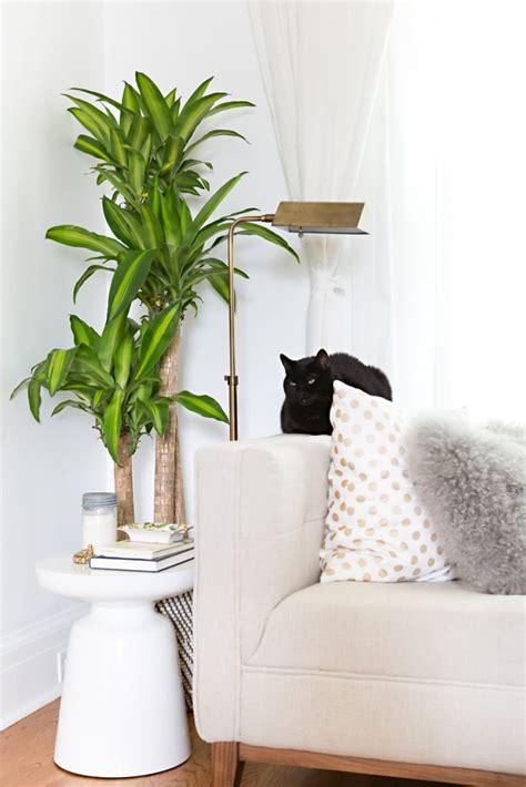 large indoor plants chic renter hacks
