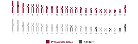 test prenatale non invasivo prenatalsafekaryo il primo test non invasivo di diagnosi