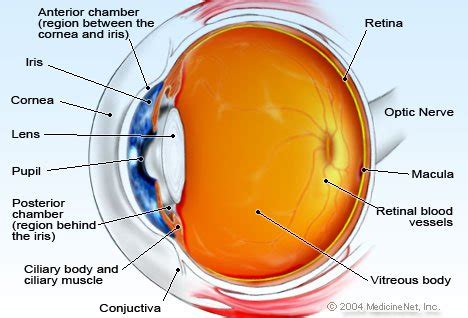 colored eyeball part eye anatomy detail picture image on medicinenet