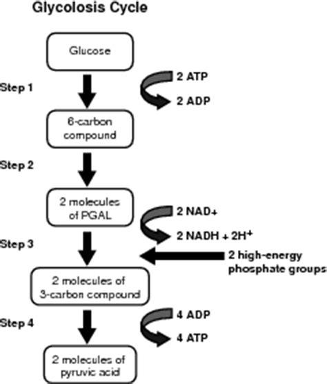 Simple Dua Sembilan reaksi biokimia dalam respirasi sel sridianti
