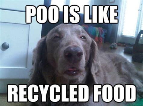 High Dog Meme - really funny dog memes memes