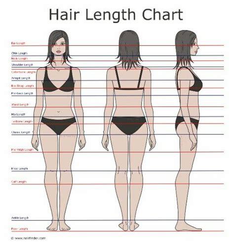 hair length chart best 25 hair length chart ideas on pinterest length of
