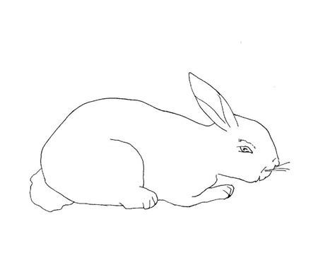 rabbit coloring page free printable rabbit coloring pages for animal place