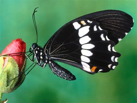 the butterfly butterfly desktop wallpapers funny photos funny mages gallery