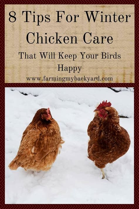 8 Tips For Winter 8 tips for winter chicken care that will keep your birds