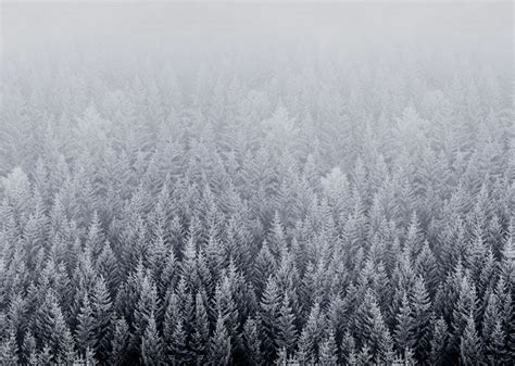 wallpaper macbook winter ios 8 snow forest default mac desktop wallpaper art