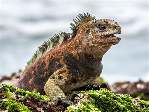 6 Amazing Animals From The Galapagos Islands by 11 Unique Animals You To See In The Galapagos Islands