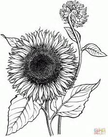coloring page gogh sunflowers coloring pages coloring pages gogh printable