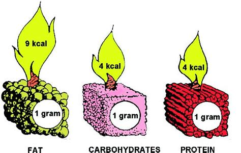 carbohydrates that provide energy the optimal pet food which 3 nutrients in pet food
