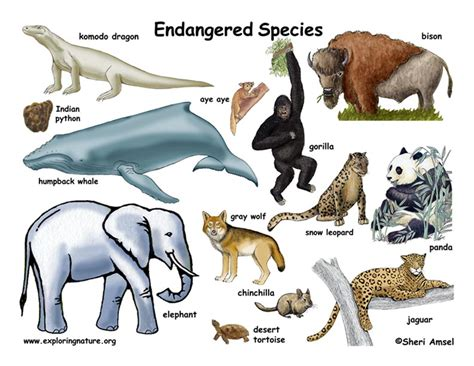 extinct breeds endangered species endangered vulnerable threatened of animals