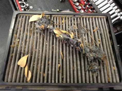 Bad Cabin Air Filter Symptoms by Bad Cabin Air Filter Dago Update
