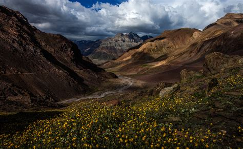 Beautiful Flowers by Travel Photography Landscape Photography And