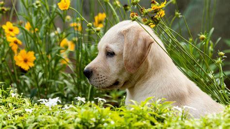 puppy keeps bulldog puppies in alabama puppies puppy