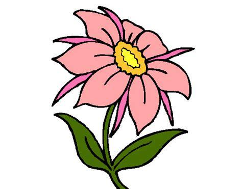 fiore disegno disegno fiore selvatico colorato da samell il 29 di