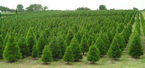 elgin christmas tree farm elgin roadtrippers