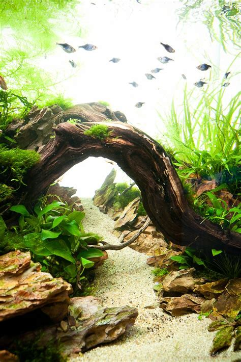 1000 ideas about nano aquarium on aquascaping
