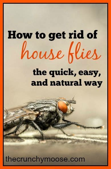 how to get rid of house flies the easy and way