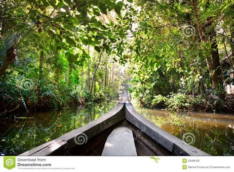 boat  backwaters jungle stock photo image  coco