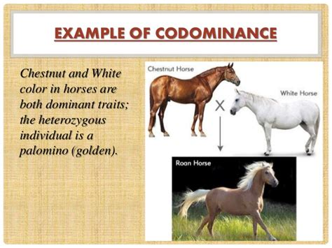 exle of codominance incomplete and co dominance
