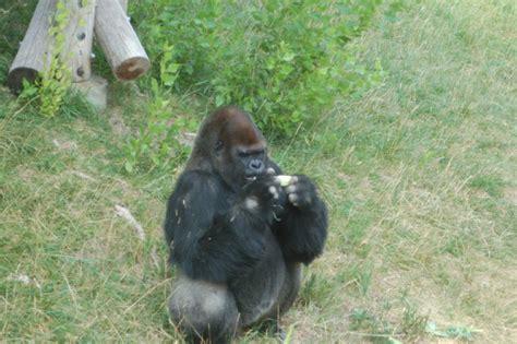 visit  hogle zoo slc ut