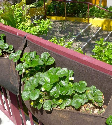 edible gardens edible gardens beyond the brochure