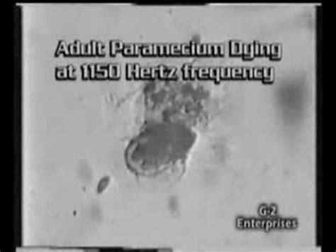 Terminator Gold Detox by Zapper Parasite Detox Doovi