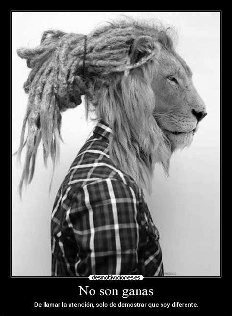 imagenes de leones rastafari no son ganas desmotivaciones