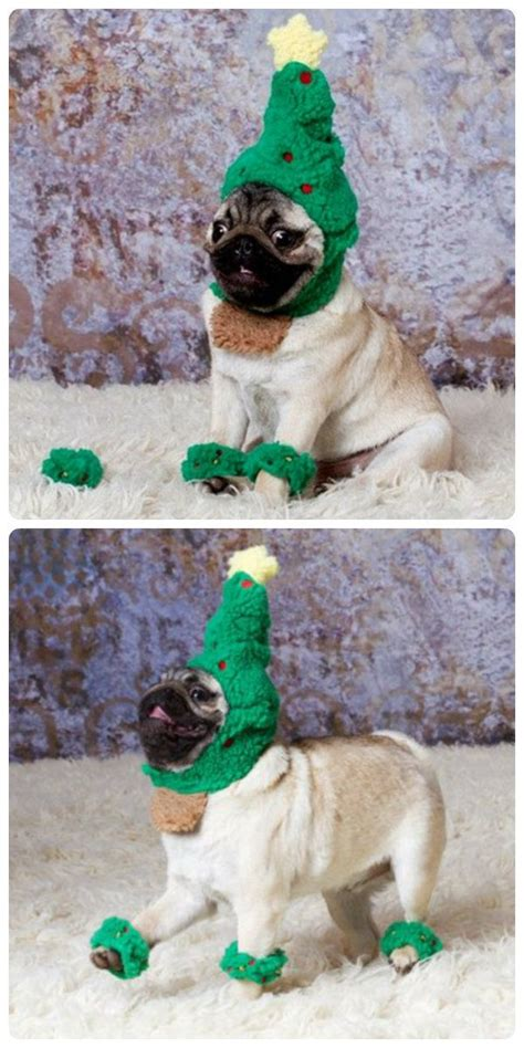 prancing pug it s the most wonderful time of the year elves animal and pug
