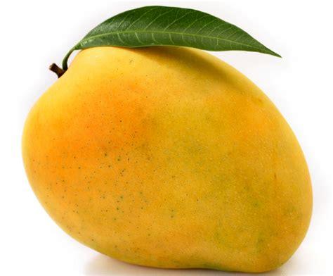 Fruit Mango fresh mango sahul trading corporation