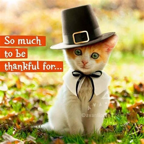 Thanksgiving Cat Meme - 225 best kitty quotes images on pinterest crazy cats