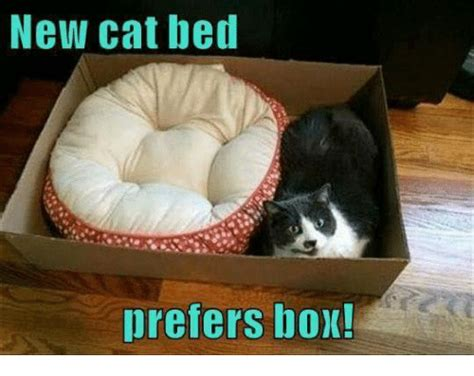 New Cat Memes - new cat bed prefers box boxing meme on sizzle