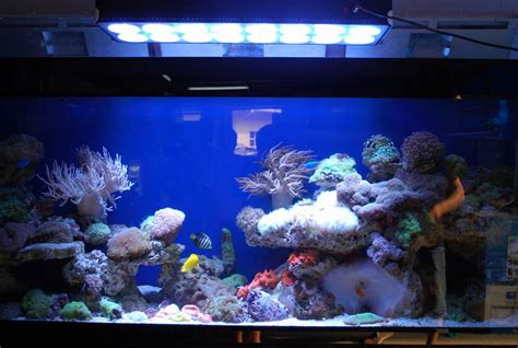 great lighting for your planted fish aquarium wishforpets